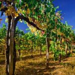 South American Wines