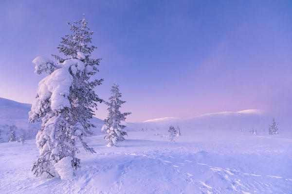 No Snow Lapland